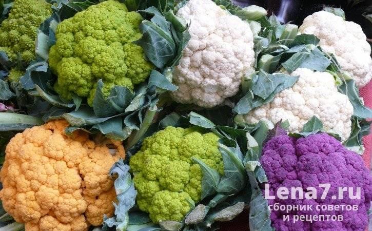 Срок годности цветной капусты