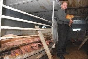 Всё о свинарнике. сарай для свиней своими руками. чертежи, фото и видео