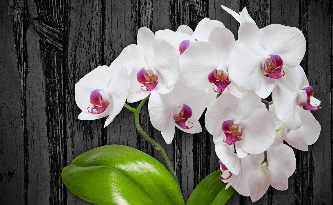 Рассказываем, как и где растет орхидея