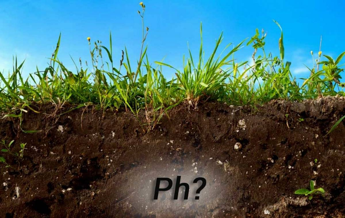 Как правильно подкислить почву на даче - способы повышения кислотности
