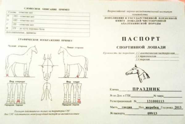 Как правильно выбрать кличку для лошади и жеребца, самые красивые имена