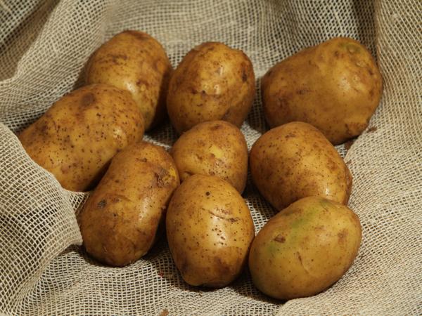 Сорт картофеля «родриго»: характеристика, агротехника выращивания