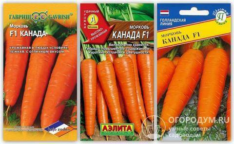 Нандрин морковь посадка и уход