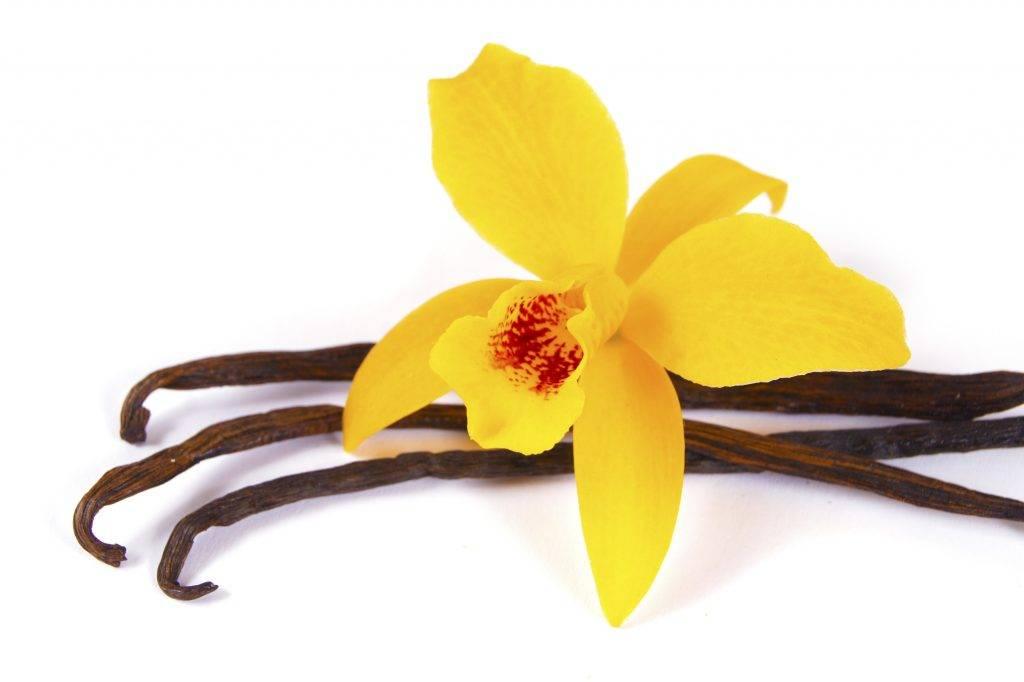 Как ухаживать за орхидеей в горшке в домашних условиях: правила ухода и содержания для начинающих, что любит цветок и нужна ли пересадка после покупки?