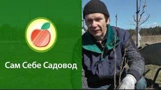 ᐉ правила посадки красной смородины и уход видео, когда лучше садить красную смородину? - my-na-dache.ru