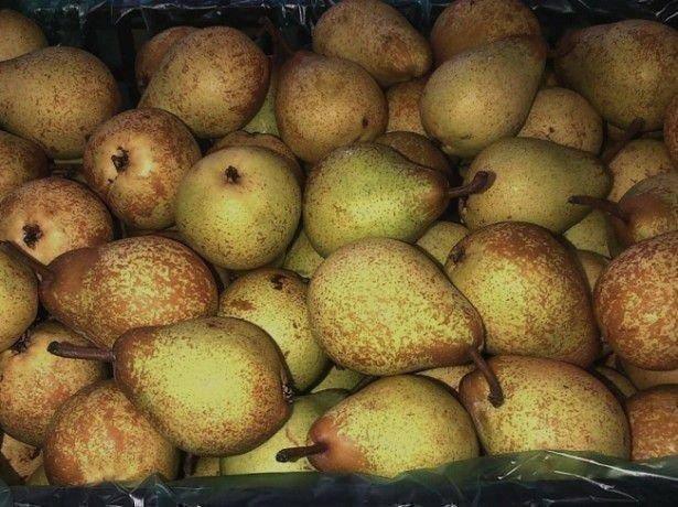 10 лучших поздних сортов груш: осенних и зимних