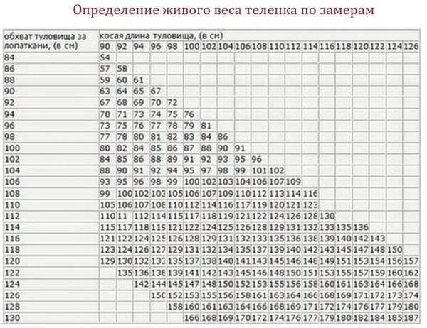 Как узнать вес быка без весов: таблица измерения крс, лента обмера