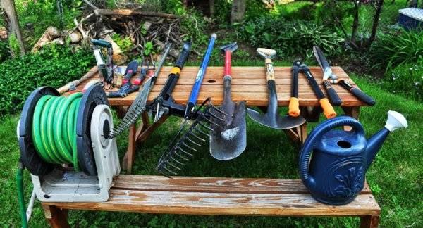 Уход за крыжовником весной: снять укрытие, полив, подкормка, обрезка, обработка