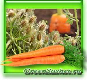Морковное масло. польза и применение. — полезный.про
