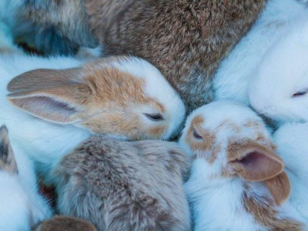 Разведение декоративных кроликов — бизнес план