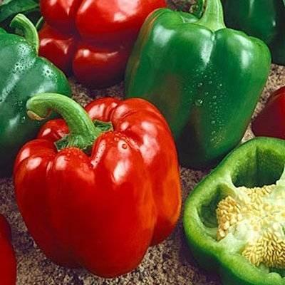 Перец богатырь: характеристика и описание сорта, выращивание и уход