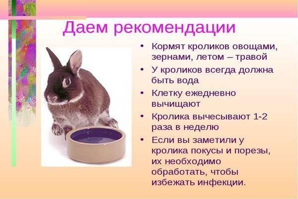 Сколько раз в день нужно кормить кроликов