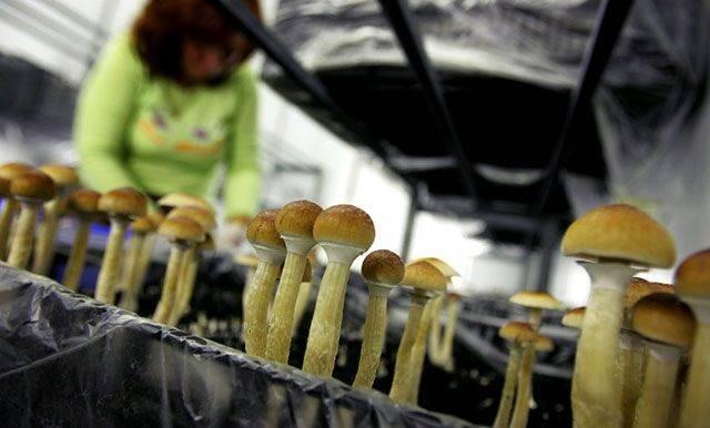 Выращивание грибов в домашних условиях для новичков