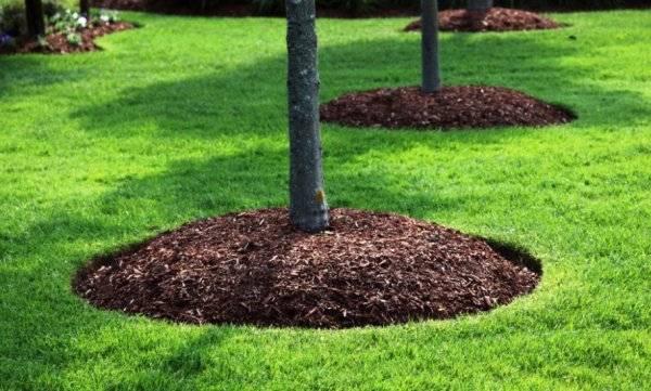 Опилки для огорода - польза и вред для растений, советы для правильного использования