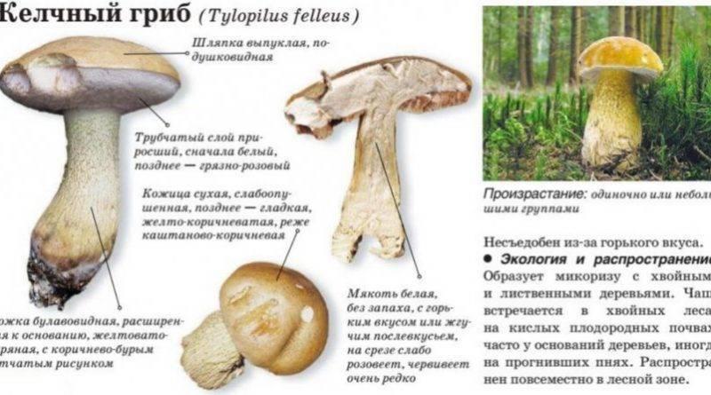 Выращивание белых грибов в домашних условиях на приусадебном участке: пошаговая инструкция