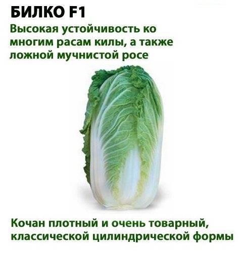 Польза и вред пекинской капусты для организма человека, противопоказания |