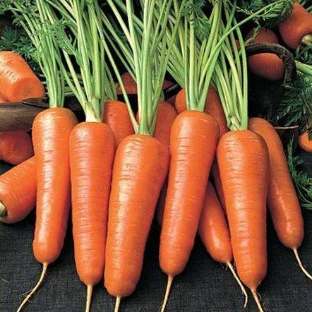 Что такое морковь: овощ или фрукт? - блогфермера