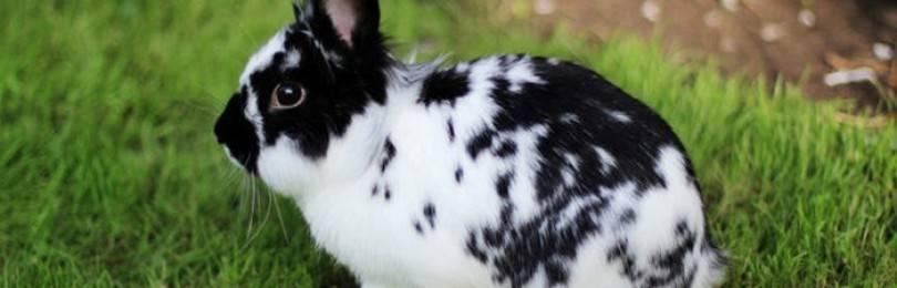 Содержание кроликов породы бабочка
