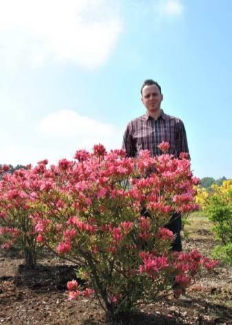 Рододендроны — посадка и уход в открытом грунте, выращивание, фото