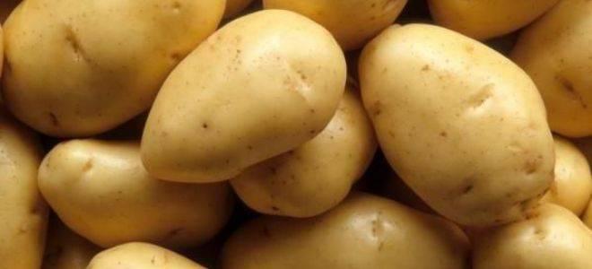 10 самых популярных сортов картофеля
