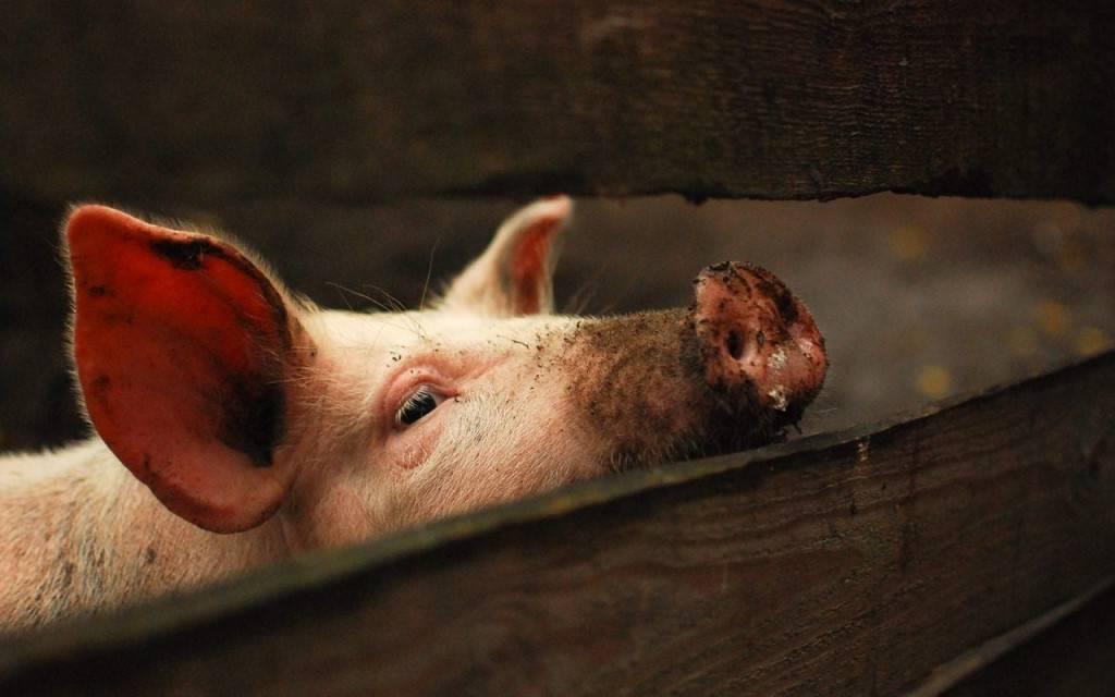 Добавка кормовая для поросят и свиней ваше хозяйство крепковит 900 гр