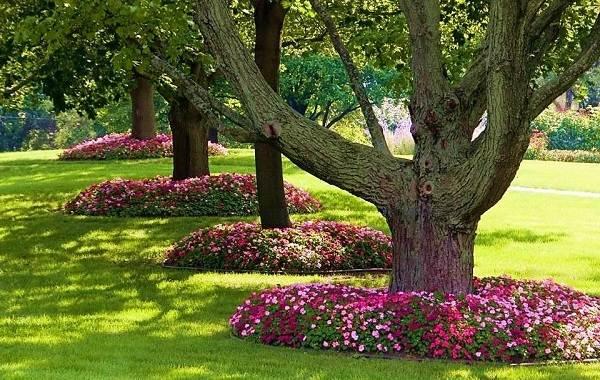 Приствольные круги плодовых деревьев: что это, как их сделать и оформить