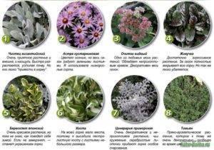 Цветы для альпийской горки с названиями и фото, выбор однолетников и многолетников