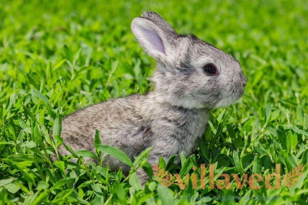 Развитие новорожденных кроликов по дням, как они выглядят и правила ухода