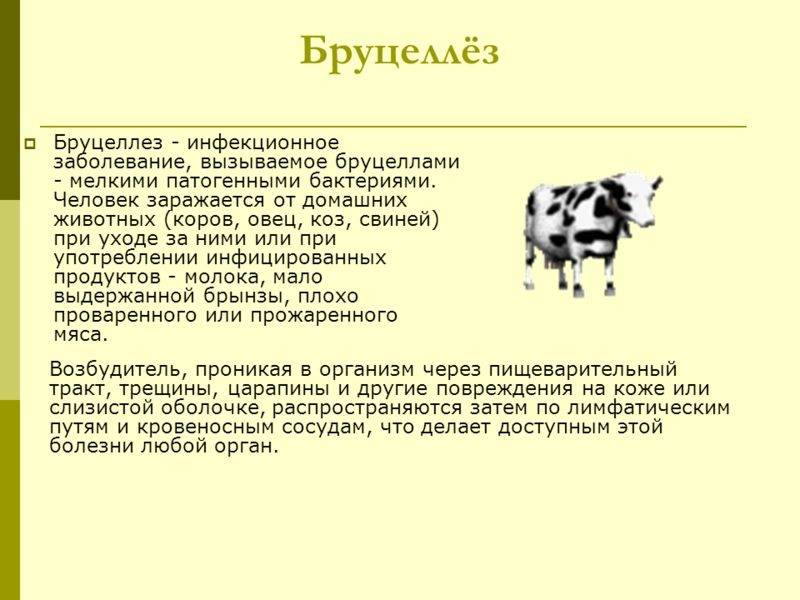 Рекомендации по правилам взятия проб крови от крупного рогатого скота - гбу ко «сухиничская межрайонная станция по борьбе с болезнями животных»