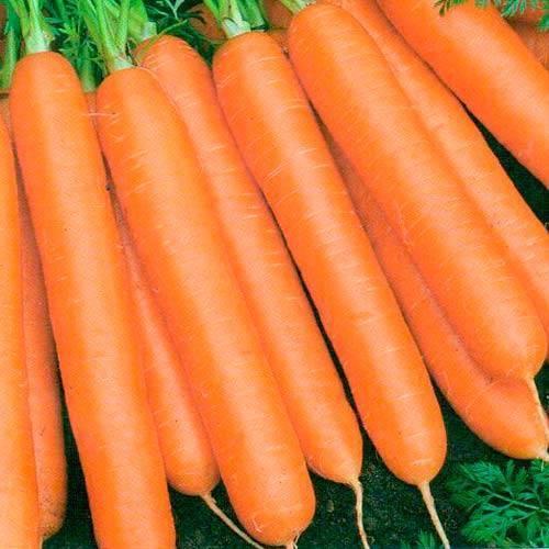 Морковь балтимор f1 описание фото отзывы - скороспел