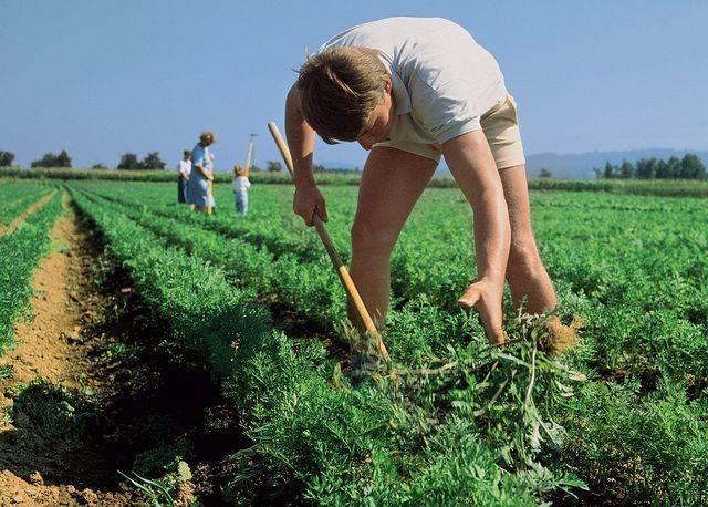Инструкция по применению гербицида от сорняков граунд, нормы расхода