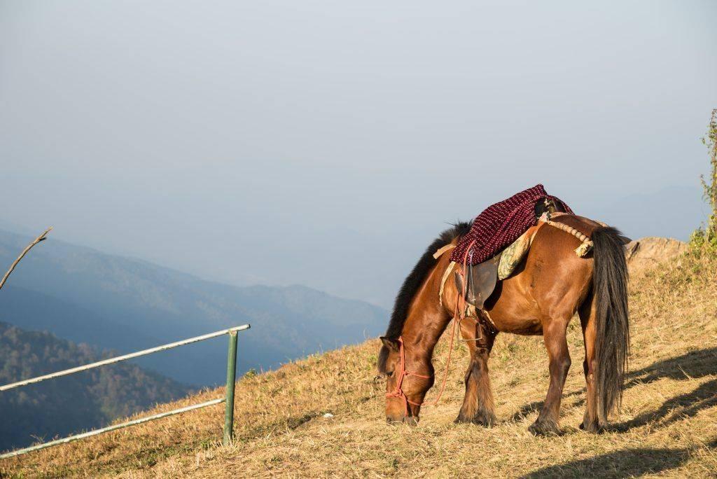 Степные породы лошадей: название, описание и фото