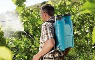 Обработка винограда осенью от болезней и вредителей, перед укрытием на зиму