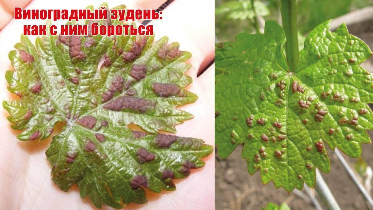 Пестициды против клеща на винограде - 27 препаратов