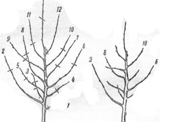 Схема обрезки деревьев весной для начинающих