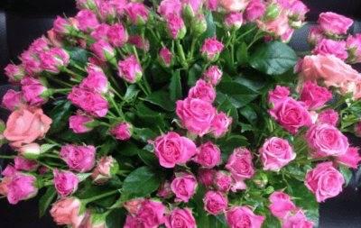 Что такое кустовые розы
