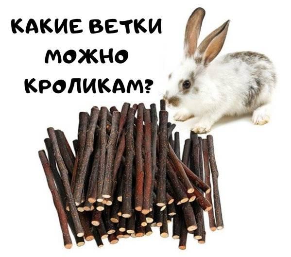 Какие ветки можно давать кроликам?
