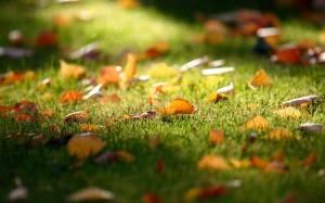 Газонная трава – когда сажать? осень, весна и лето.