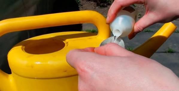Желтеет чеснок на грядке - чем полить и подкормить?