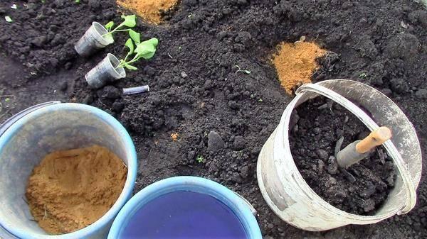 Уход за баклажанами в теплице от посадки до урожая: как и в какой срок высаживать кусты в летний и зимний парник из поликарбоната и правильное формирование культуры