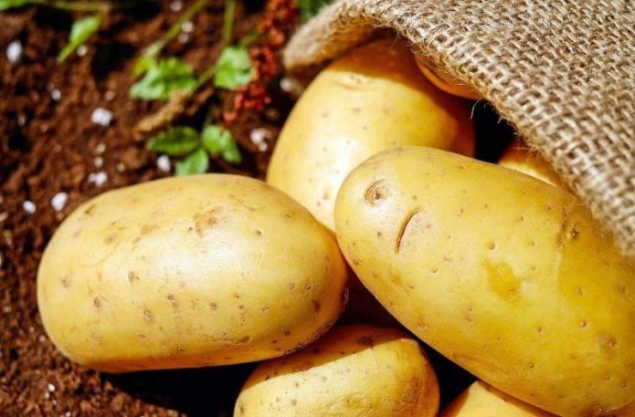 Красные сорта картофеля (с розовой или красной кожурой, глазками): описания и характеристики