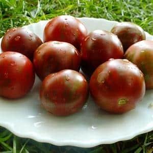 Описание томата шоколадное чудо и рекомендации по выращиванию сорта