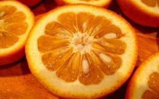 Апельсин в домашних условиях. как вырастить апельсин дома - вмоменте