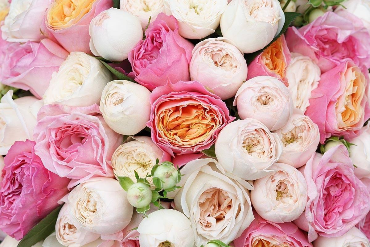 Красивые кустовые пионовидные розы: сорта и цвета
