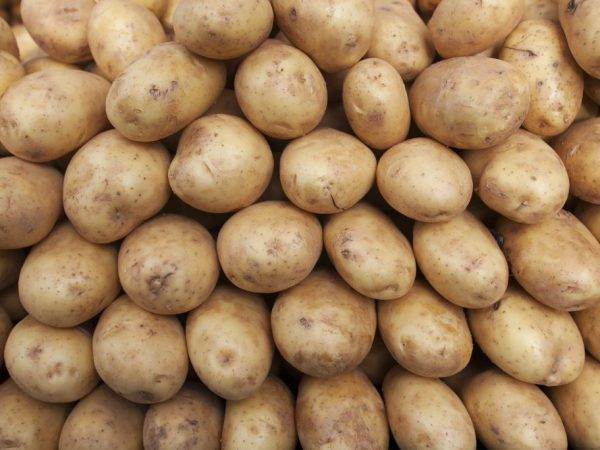 ᐉ сорт картофеля «бриз» – описание и фото - roza-zanoza.ru