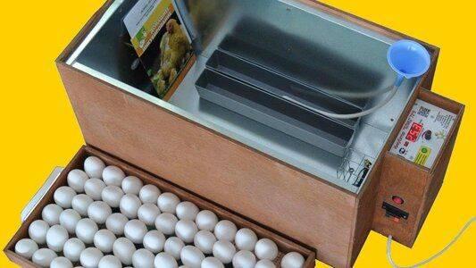 Овоскопирование — заглянем внутрь куриного яйца