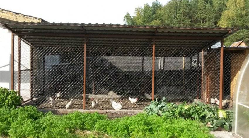 Курятник своими руками: 105 фото и пошаговая инструкция постройки утепленного курятника