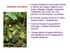 Происхождение огурцов