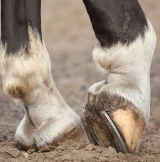 Зачем же нужно подковывать лошадей