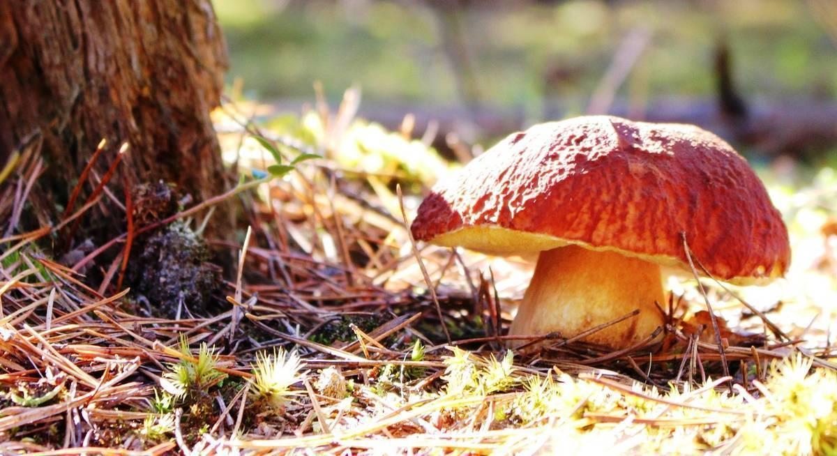 Особенности выращивания грибов для новичков: как вырастить грибной урожай в домашних условиях?